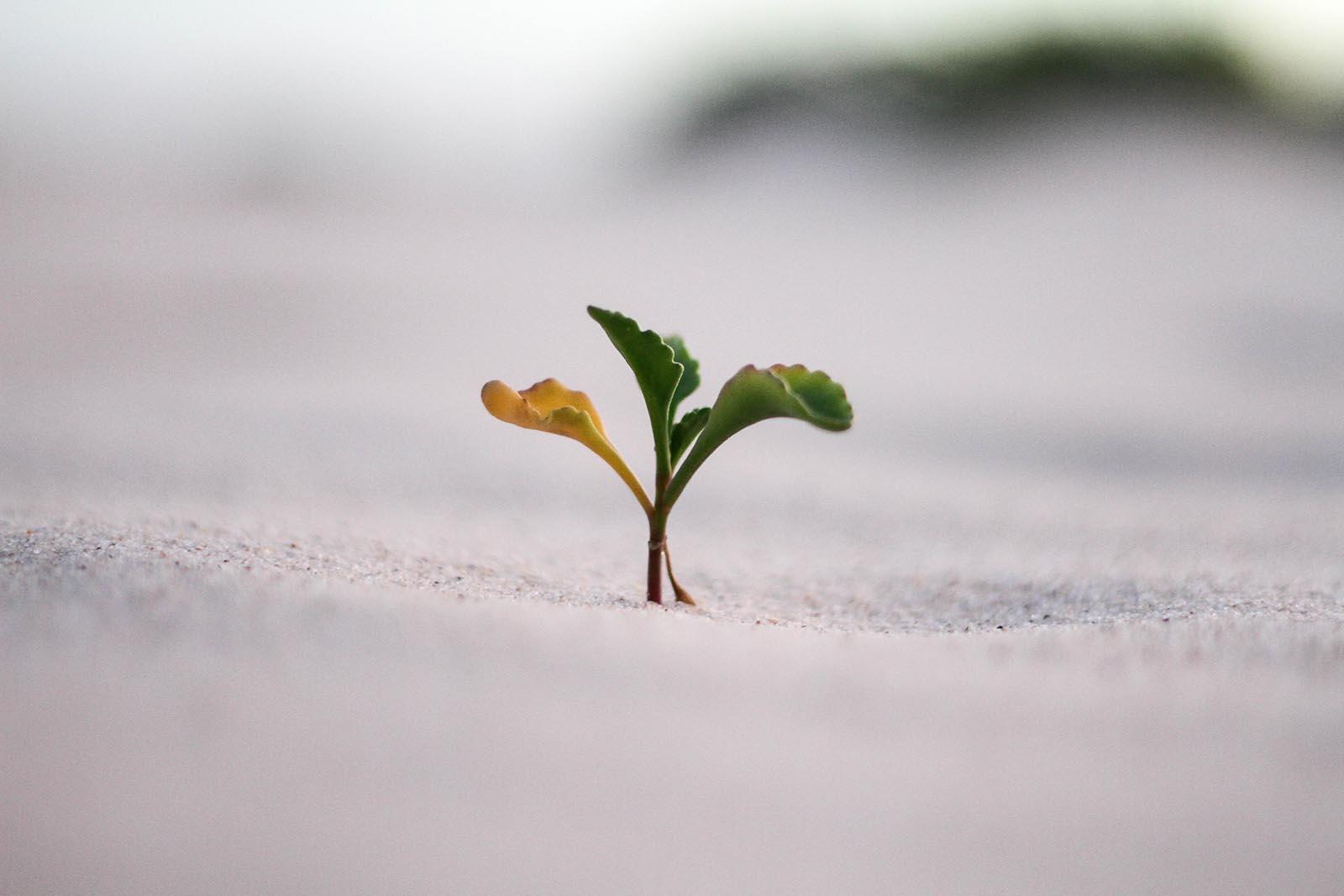 Growing Plant.jpg